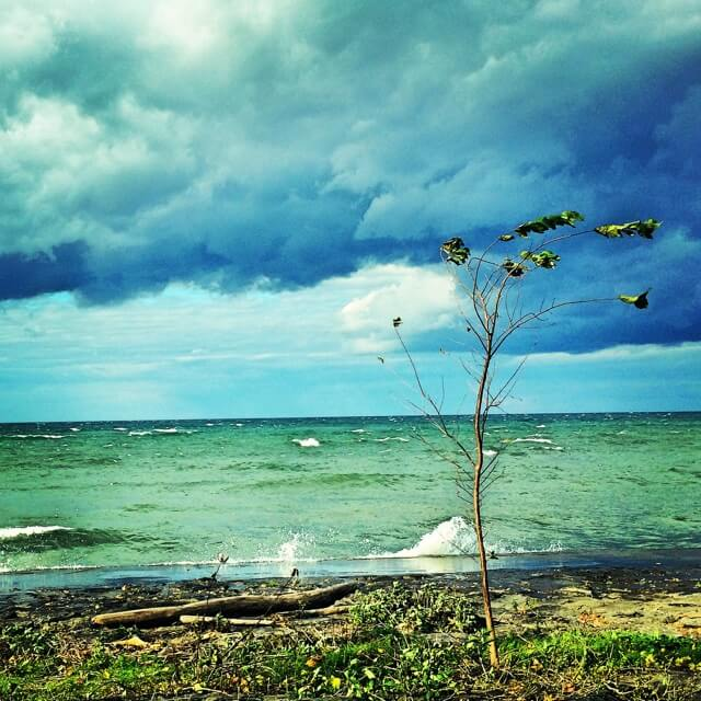 Those clouds though (Webster Park)